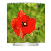 Austrian Poppy Shower Curtain