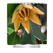 Autograph Tree Seed Pod Shower Curtain