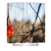 Automn Fruits Shower Curtain