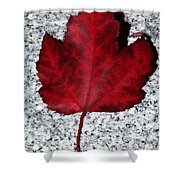 Autum Maple Leaf 1 Shower Curtain