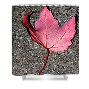 Autum Maple Leaf 2 Shower Curtain