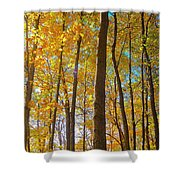 Autumn Afternoon Light Shower Curtain