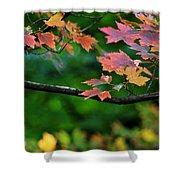 Autumn Along The Branch Shower Curtain