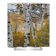 Autumn Aspens 8 Shower Curtain