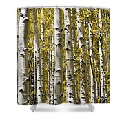 Autumn Aspens Shower Curtain by Adam Romanowicz