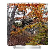 Autumn At Beech Forest Shower Curtain