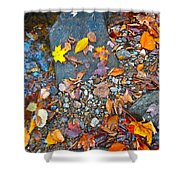 Autumn B 2015 116 Shower Curtain