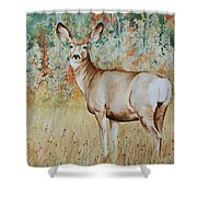 Autumn Beauty- Mule Deer Doe  Shower Curtain