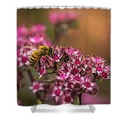 Autumn Bee On Flowers Shower Curtain