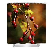 Autumn Berries Shower Curtain