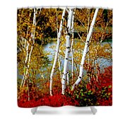 Autumn Birch Lake View Shower Curtain
