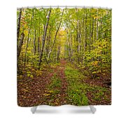 Autumn Birch Woods Shower Curtain