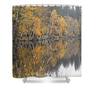 Autumn Birches On The Shore Of Lake Shower Curtain