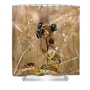 Autumn Blackberries Shower Curtain