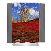Autumn Birches And Barrens Shower Curtain