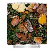Autumn Carpet 001 Shower Curtain