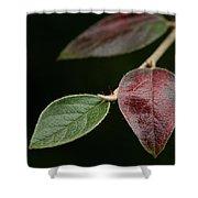Autumn Change Shower Curtain