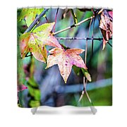 Autumn Color Changing Leaves On A Tree Branch Shower Curtain
