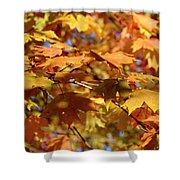 Autumn Colors 3  Shower Curtain