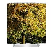 Autumn Colors 8 Shower Curtain