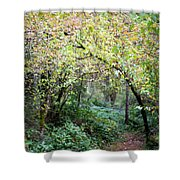 Autumn Colors In The Forest Shower Curtain