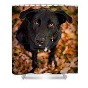Autumn Dog Shower Curtain