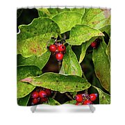 Autumn Dogwood Berries Shower Curtain