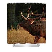 Autumn Elk In Cataloochee Valley Textured Shower Curtain