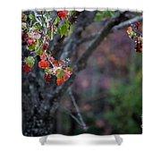 Autumn Fade Shower Curtain