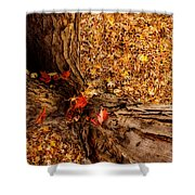 Autumn Fall  Dream Shower Curtain