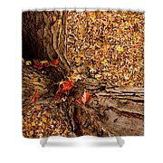 Autumn Fall Shower Curtain
