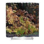 Autumn Ferns Shower Curtain
