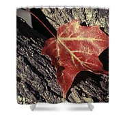 Autumn Find Shower Curtain