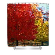 Autumn Fire  In  Red  And  Gold Shower Curtain