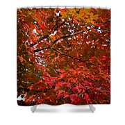 Autumn Foliage-1 Shower Curtain