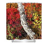 Autumn Foliage In Finland Shower Curtain