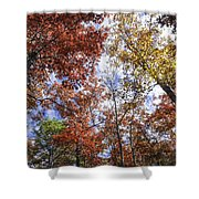 Autumn Forest Canopy Shower Curtain