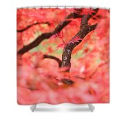 Autumn From Within Shower Curtain