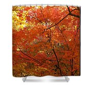 Autumn Gold Poster Shower Curtain