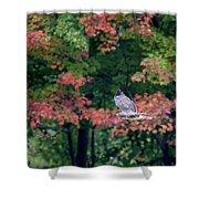 Autumn Hawk Square Shower Curtain