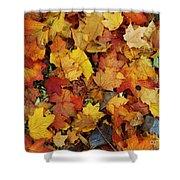 Autumn In Canada Shower Curtain