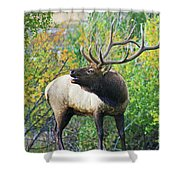 Autumn In Estes Park Shower Curtain