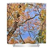 Autumn In Full Swing Shower Curtain
