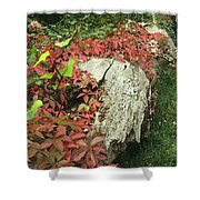 Autumn In Hampstead Shower Curtain