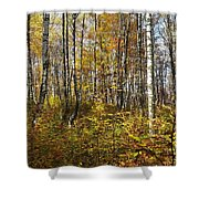 Autumn In The Birches Forest Shower Curtain