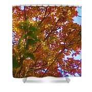 Autumn In The Canopy Shower Curtain