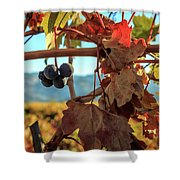Autumn In The Wine Country Shower Curtain