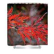 Autumn Japanese Maple Shower Curtain