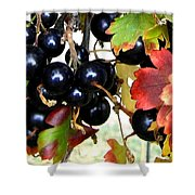 Autumn Jostaberries Shower Curtain
