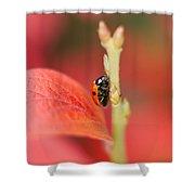 Autumn Ladybird Shower Curtain